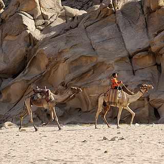 Junge reitet auf einem Kamel in Ägypten