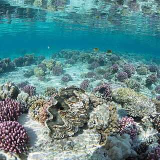 Unterwasserwelt am Riff in der Nähe des TUI MAGIC LIFE Kalawy.
