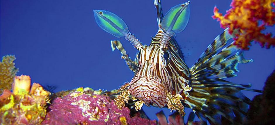 Atemberaubende Unterwasserwelten